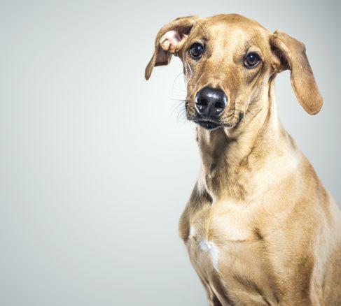 Fattar du hundspråket? Håll koll på ögon, svans & öron…