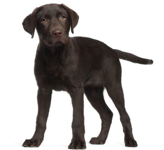 Hundsportens insamling till Musikhjälpen 2015