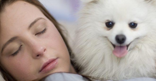 Härliga hundar hundförståelse