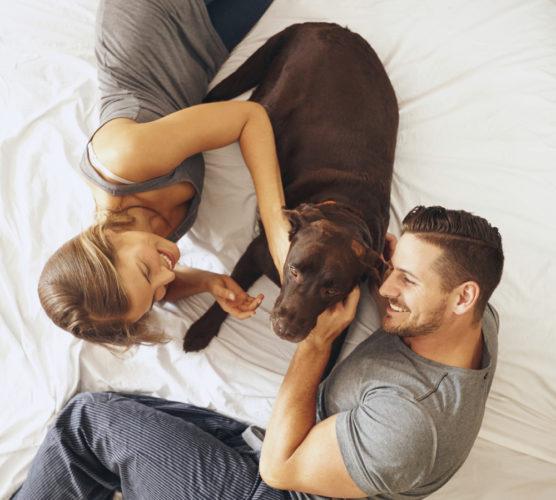 Hjälp! Vi ska skilja oss – hur gör vi med hunden?