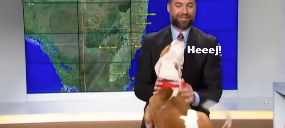 FILM: Hund i tv-studion