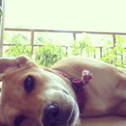Nala – hunden som inte ville lämna mig