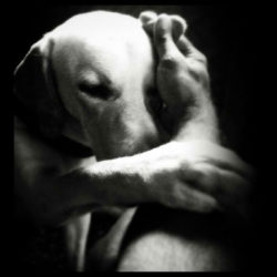 Sov gott, älskade hund