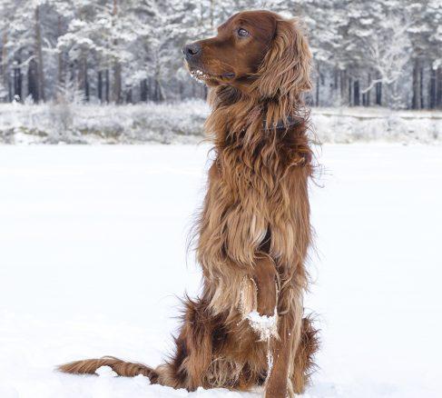 Fryser hunden? Här får du svar på vanliga vinterfrågor
