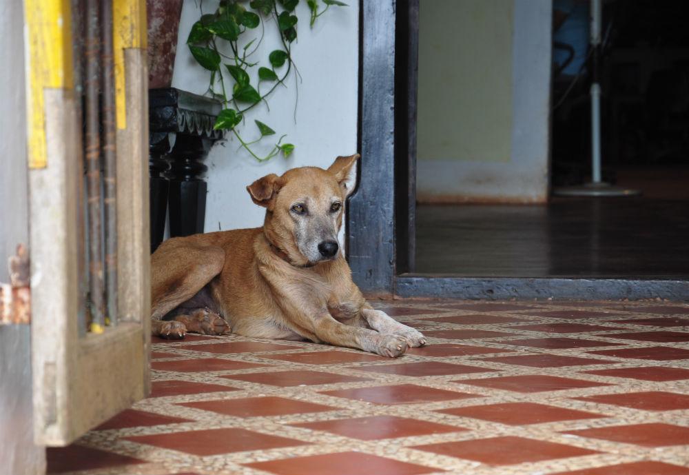 En stilig, äldre herre ligger och spanar ut över trappen.