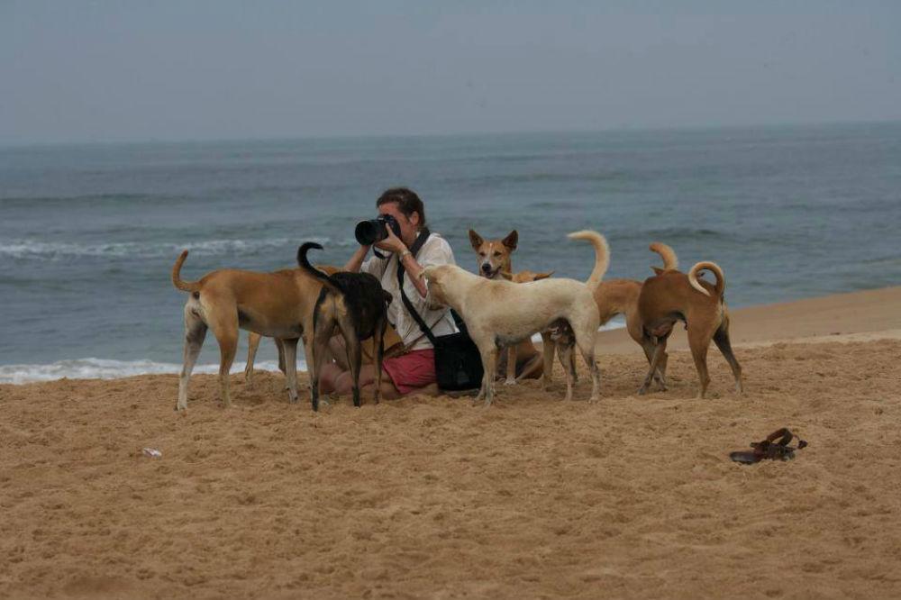 Annika med hundar på en strand i Goa.
