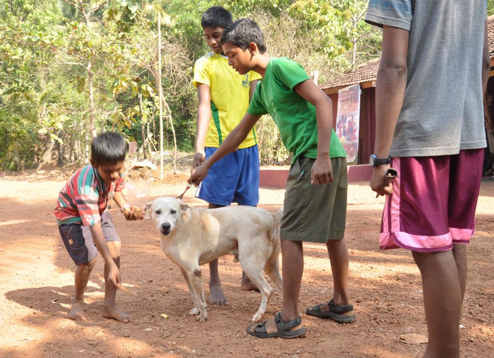 Karen hade tagit med hembakade hundkex som barnen fick ge åt hundarna.