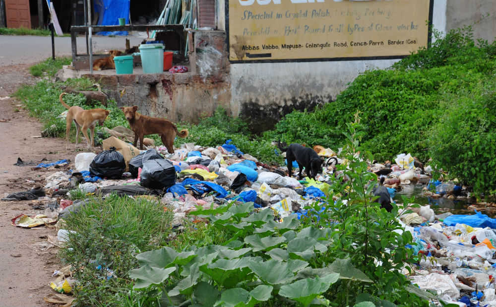 Sopberget växer sig allt större och dessa hundar är där och äter varje dag.