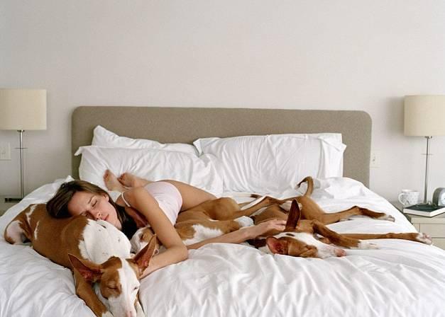 Hundar som sover i sänger med matte