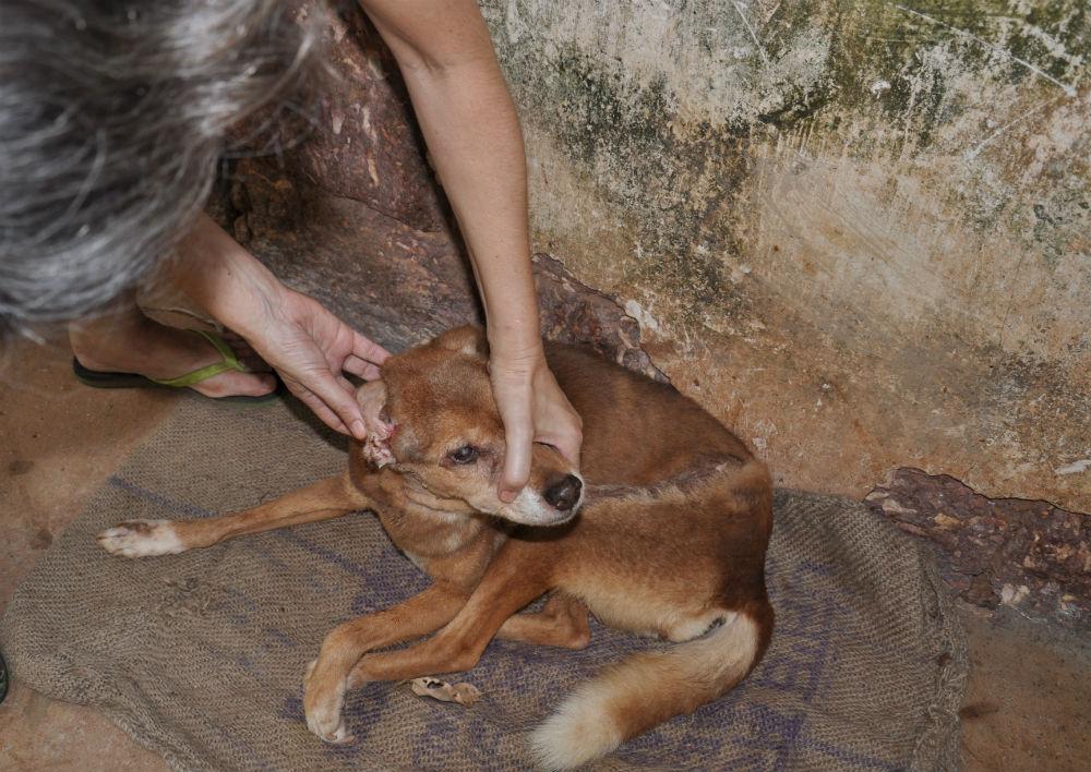 Fionna visar upp en hund som tidigare hade krälande larver i örat.