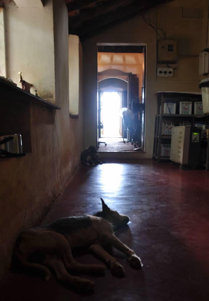 Skönt att vila på det kalla golvet i köket.