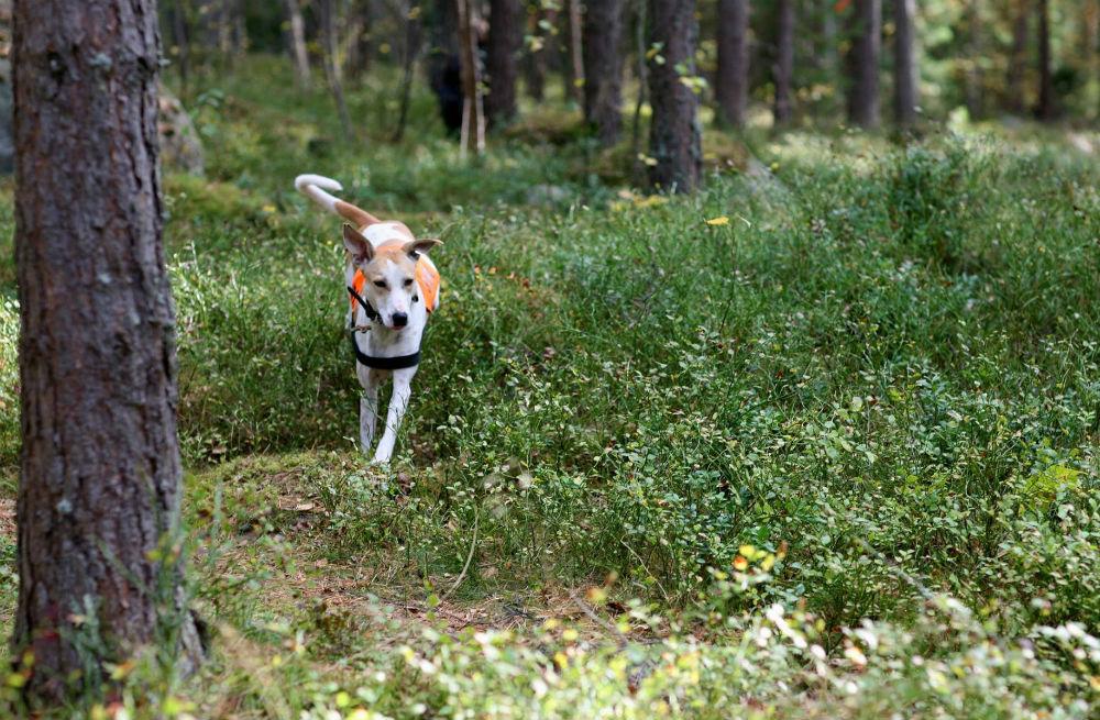 Mira springer fritt i skogen.