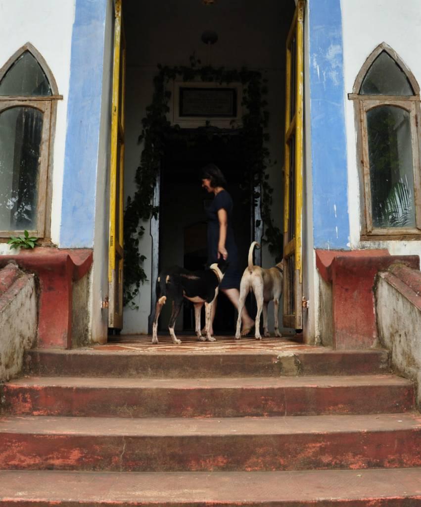 Glada hundar på Fionnas trapp.