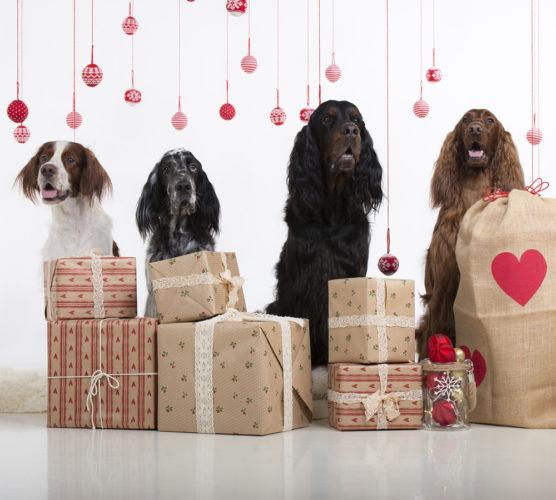 Hundar med julpynt och stora paket.