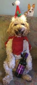 Hund med glöggflaska!