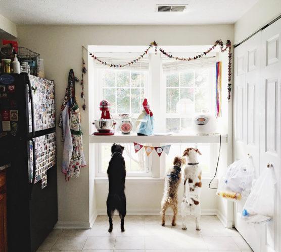 """""""Hundhotell"""" hemma hos privatperson"""