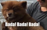 KORTFILM: Alla kan väl hundsim?