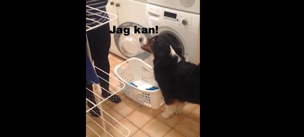 hund hjälper till med tvätt