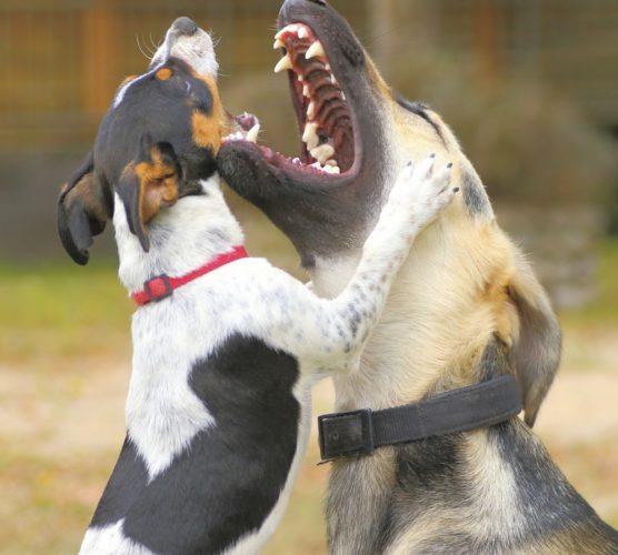 Hjälp, hundslagsmål! Vad gör jag?