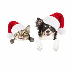 glad katt och hund i julmundering