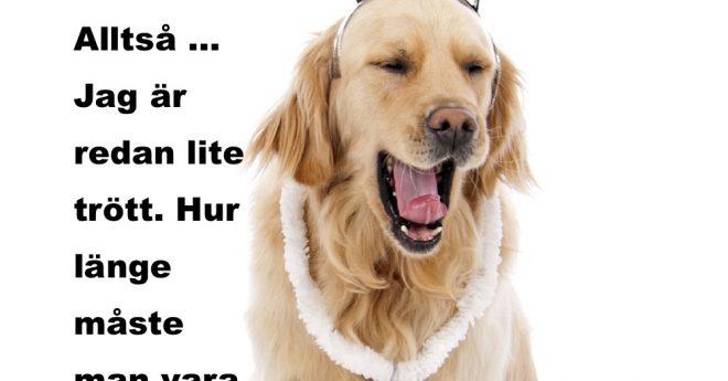 hund som gäspar
