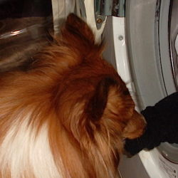 harry hjälper till med tvätten hemma