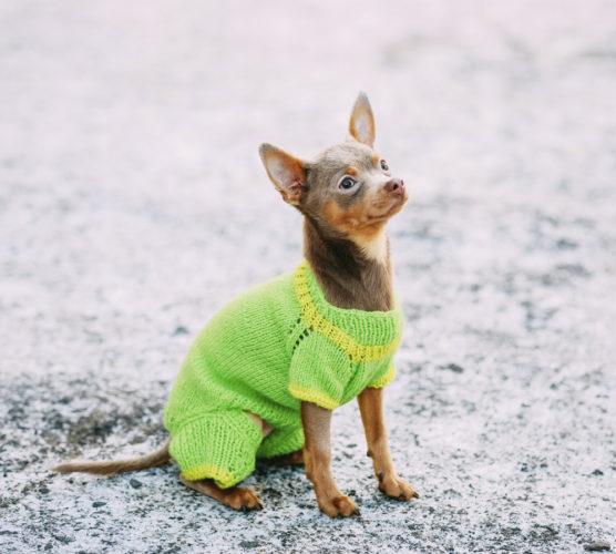 7 vanliga hudproblem hos hund – orsaker & behandling