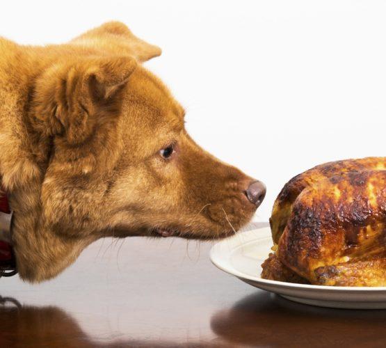 Är din hund en klimatbov?