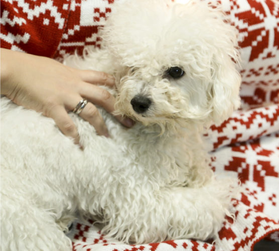 Hundar lever farligt under december