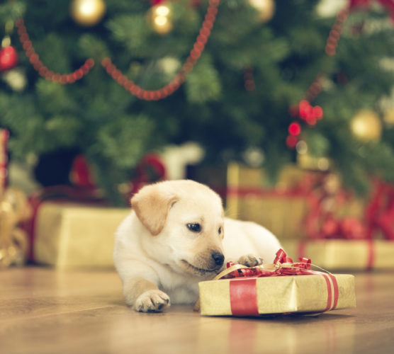 7 av 10 köper julklappar till sina husdjur