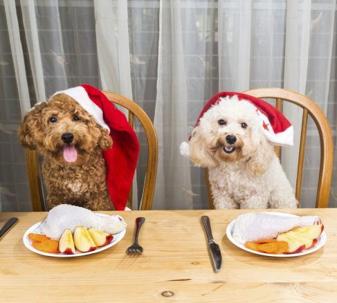glada hundar på julmiddag