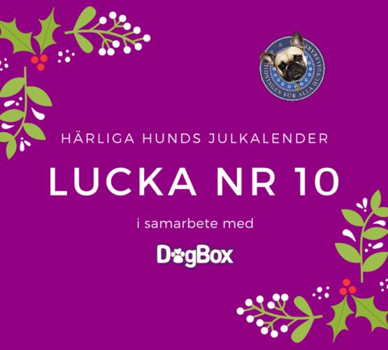 Lucka 10