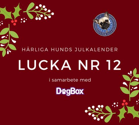 Lucka 12