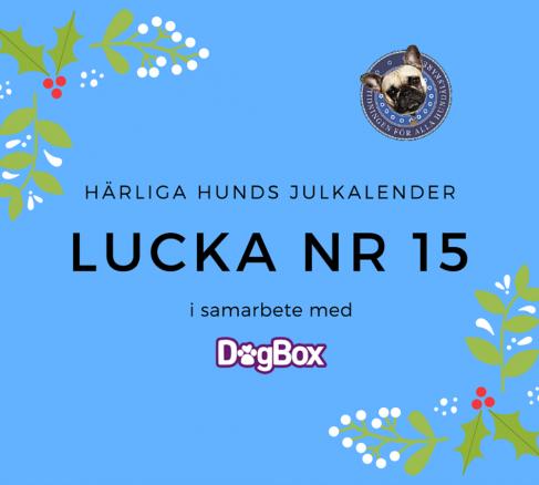 Lucka 15