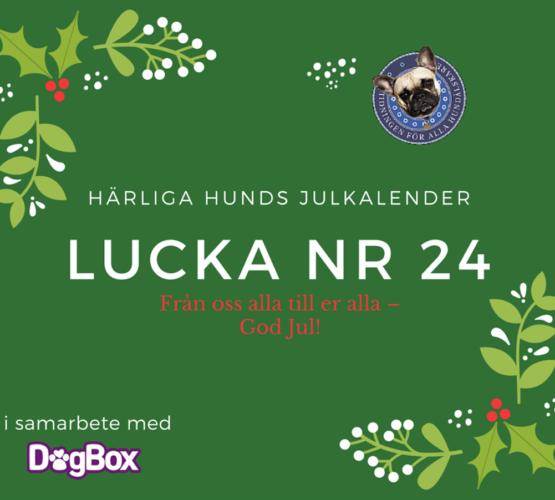 julkalender_luckanr_24