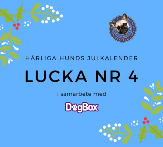 Lucka 4