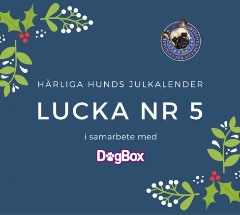 Lucka 5