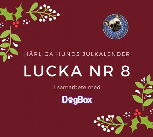 Julkalendern 8 december