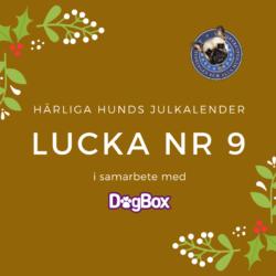 Julkalenderns 9 december