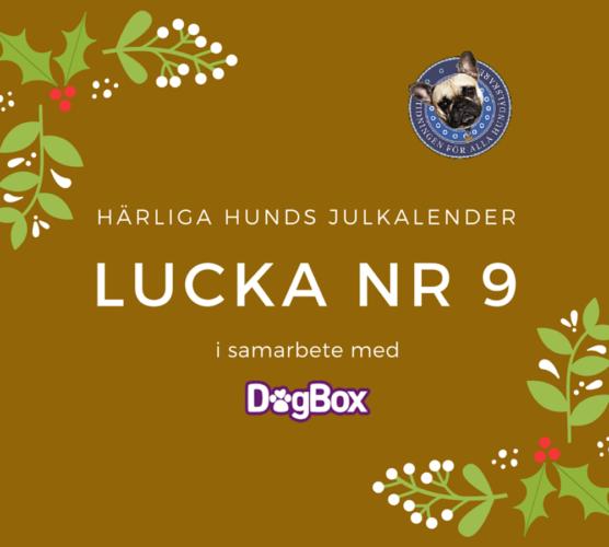 Lucka 9