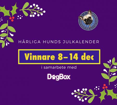 Vinnarna i julkalendern 1–8 dec