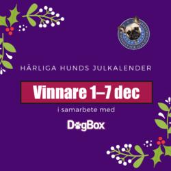 julkalender_vinnare_1_7