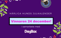 julkalendervinnare 24 dec