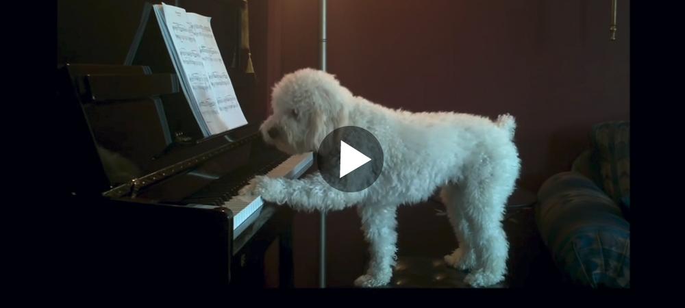 Schnoodeln Tucker är en riktig pianolirare