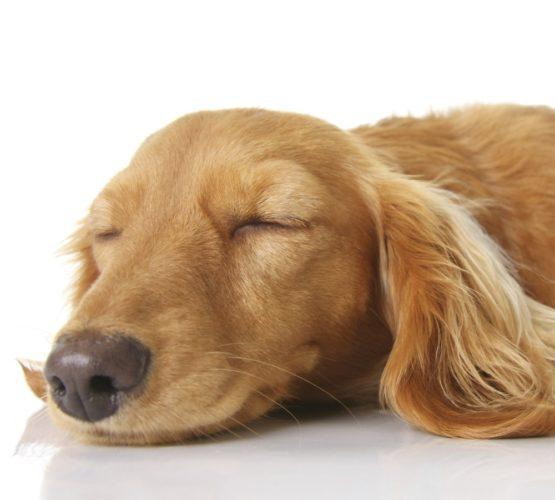 Vad Dr 246 Mmer Hundar Om H 228 Rliga Hund