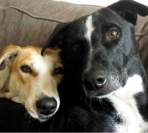 Hon adopterade gatuhundar från Goa