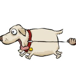 hund som drar i kopplet, man ser inte husse