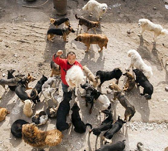Miljonären Wang Yan räddar hundar