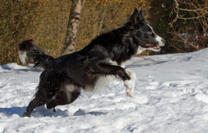 Hund i vinter – 5 tips