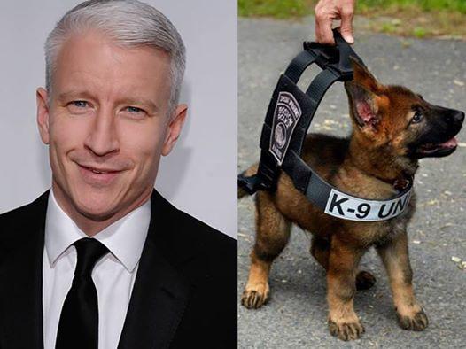 Anderson Cooper & en valp som kanske blir en stor, stark polishund när den blir stor.